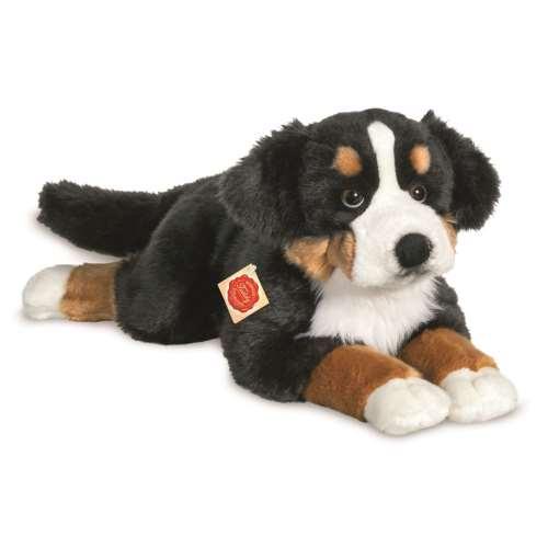 Berner Sennenhund. liegend, 60 cm